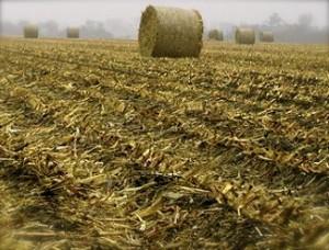 Iowa Corn Residue