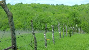 A fence line shows a boundary in Iowa.